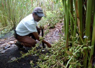 Fortalecimiento de capacidades de productores agroforestales en el sur de Petén, para la restauración de paisajes forestales y desarrollo de negocios rurales inclusivos