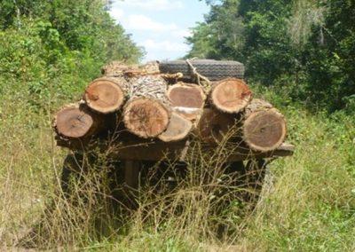 Coordinación transfronteriza para reducir el tráfico ilegal de vida silvestre en el corredor verde de Guatemala-México